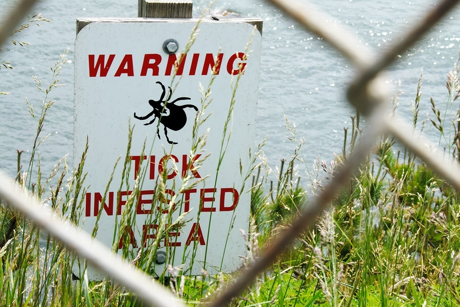 lyme-disease-tick-Warning-Sign