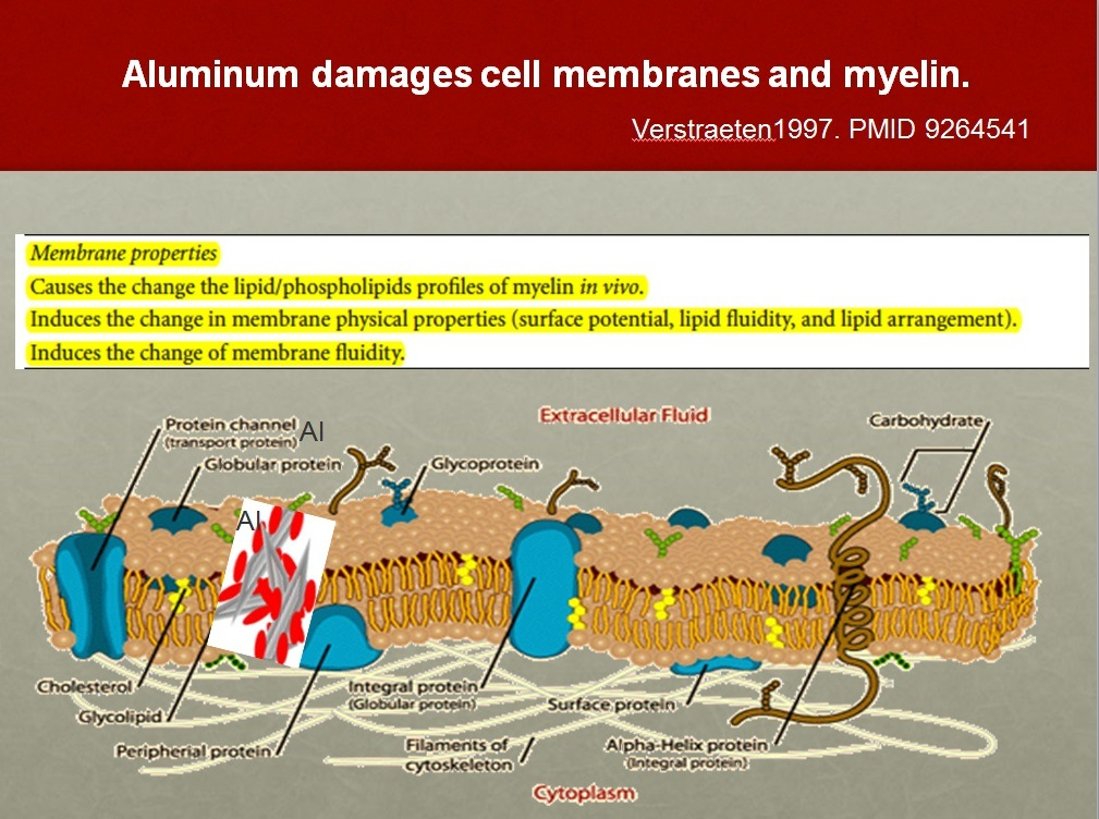 aluminum-damaged-cells
