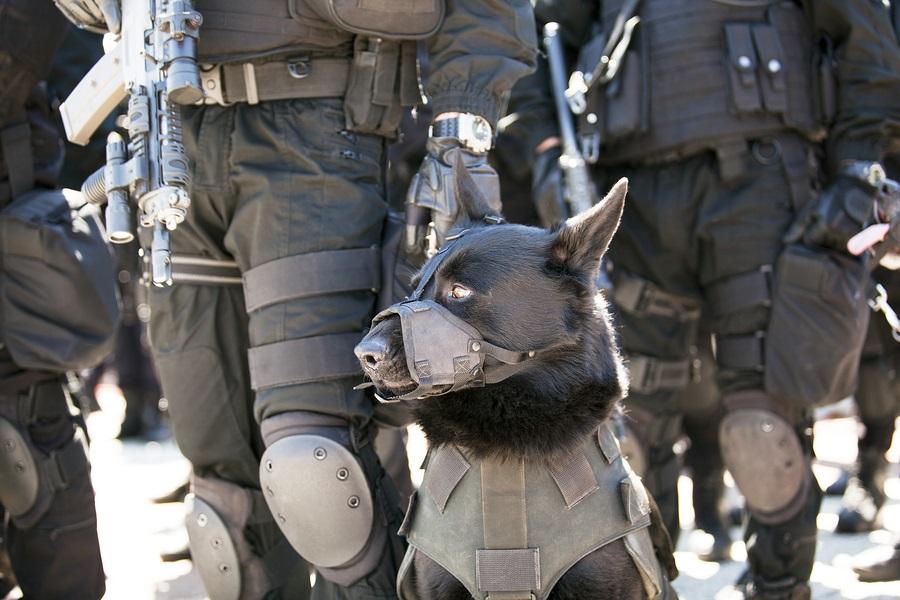 Police officer and his dog. Black german shepherd.